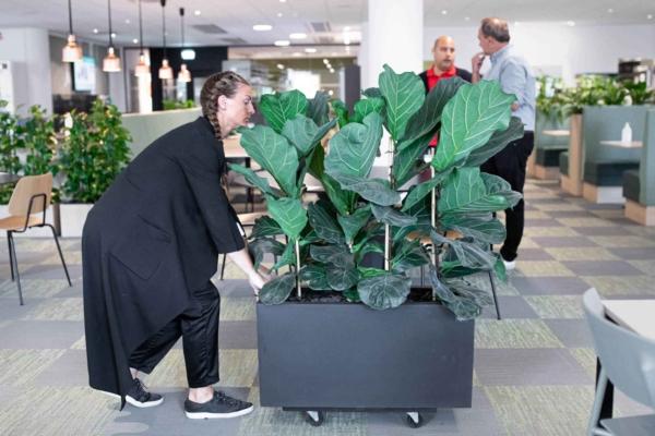 Skärmvägg med växter