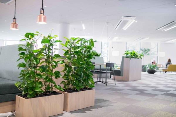 Växtlådor som skärmvägg